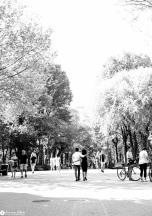 sam-tess-central-park-surprise-proposal-64