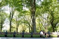 sam-tess-central-park-surprise-proposal-75